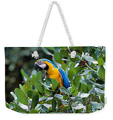 Blue And Yellow Macaw Weekender Tote Bag by Art Wolfe