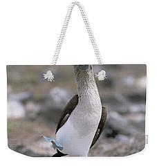 Blue-footed Booby In Courtship Dance Weekender Tote Bag by Konrad Wothe