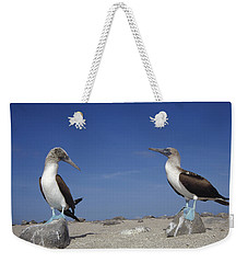 Blue-footed Booby Pair Galapagos Islands Weekender Tote Bag by Tui De Roy
