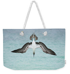 Blue-footed Booby Plunge Diving Weekender Tote Bag by Tui De Roy