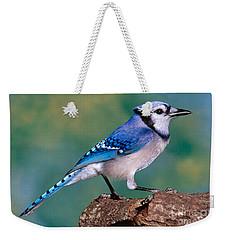 Blue Jay Weekender Tote Bag by Millard H. Sharp
