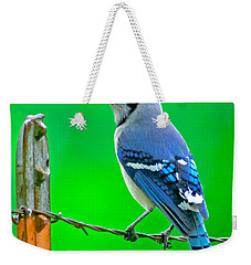 Blue Jay On The Fence Weekender Tote Bag by Robert Frederick