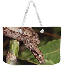 Boa Constrictor Coiled South America Weekender Tote Bag by Gerry Ellis