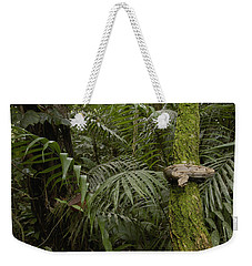 Boa Constrictor In The Rainforest Weekender Tote Bag by Pete Oxford