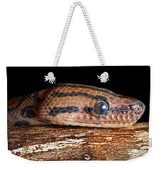 Weekender Tote Bag featuring the photograph Brazilian Rainbow Boa Epicrates Cenchria by David Kenny