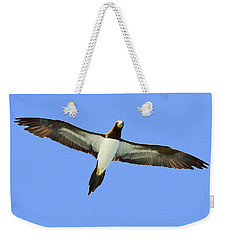 Brown Booby Weekender Tote Bag by Tony Beck
