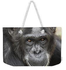 Chimpanzee Portrait Ol Pejeta Weekender Tote Bag by Hiroya Minakuchi