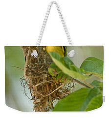 Close-up Of Two Common Tody-flycatchers Weekender Tote Bag by Panoramic Images