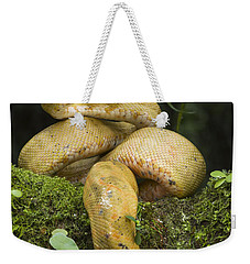Common Tree Boa -yellow Morph Weekender Tote Bag by Pete Oxford