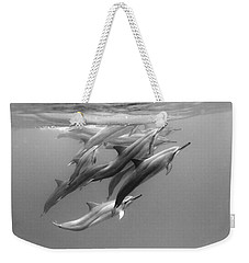 Dolphin Pod Weekender Tote Bag by Sean Davey