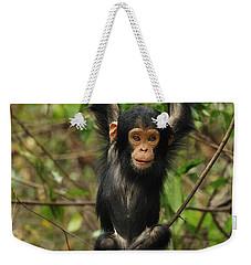 Eastern Chimpanzee Baby Hanging Weekender Tote Bag by Thomas Marent