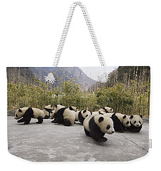 Giant Panda Cubs Wolong China Weekender Tote Bag by Katherine Feng