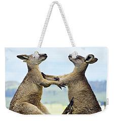 Grey Kangaroo  Males Fighting Tasmania Weekender Tote Bag by David Parer and Elizabeth Parer Cook