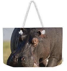 Hippopotamus Bull Charging Botswana Weekender Tote Bag by Vincent Grafhorst