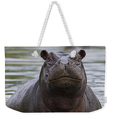 Hippopotamus Bull Khwai River Botswana Weekender Tote Bag by Vincent Grafhorst
