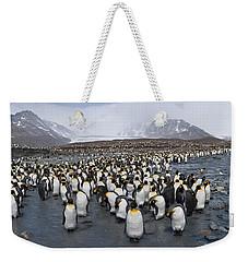 King Penguins Aptenodytes Patagonicus Weekender Tote Bag by Panoramic Images