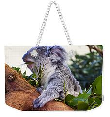 Koala Eating In A Tree Weekender Tote Bag by Chris Flees