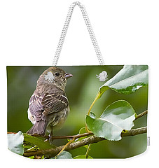 Lazuli Bunting Female 2 Weekender Tote Bag by Sharon Talson