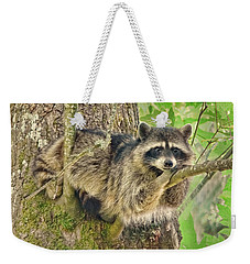 Lazy Day Raccoon Weekender Tote Bag by Jennie Marie Schell