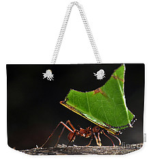 Leafcutter Ant Weekender Tote Bag by Francesco Tomasinelli