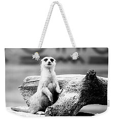 Little Meerkat Weekender Tote Bag by Pati Photography