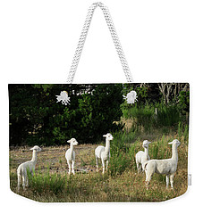 Llamas Standing In A Forest Weekender Tote Bag by Panoramic Images