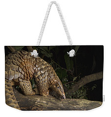 Malayan Pangolin Eating Ants Vietnam Weekender Tote Bag by Suzi Eszterhas