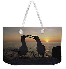 Masked Booby Couple Courting Galapagos Weekender Tote Bag by Konrad Wothe