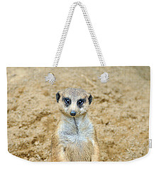 Meerkat Weekender Tote Bag by Aimee L Maher Photography and Art Visit ALMGallerydotcom