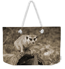 Meerkat On A Log Weekender Tote Bag by Douglas Barnard