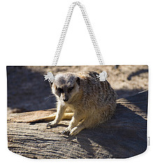 Meerkat Resting On A Rock Weekender Tote Bag by Chris Flees