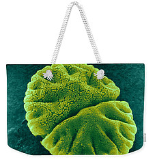 Weekender Tote Bag featuring the photograph Micrasterias Angulosa, Algae, Sem by Science Source