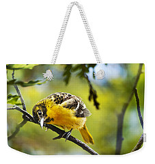 Musing Baltimore Oriole Weekender Tote Bag by Christina Rollo