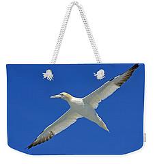 Northern Gannet Weekender Tote Bag by Tony Beck