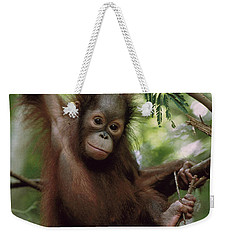 Orangutan Infant Hanging Borneo Weekender Tote Bag by Konrad Wothe