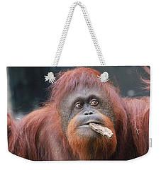 Orangutan Portrait Weekender Tote Bag by Dan Sproul