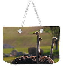 Ostriches Weekender Tote Bag by Dan Sproul