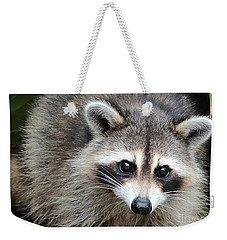 Raccoon Eyes Weekender Tote Bag by Carol Groenen