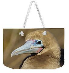 Red-footed Booby Incubating Eggs Weekender Tote Bag by Tui De Roy