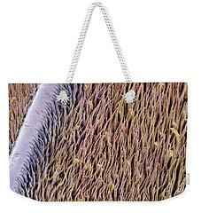 Red Palm Weevil Antenna Sem 1822x Weekender Tote Bag by Albert Lleal