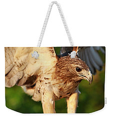 Red Tailed Hawk Hunting Weekender Tote Bag by Dan Sproul