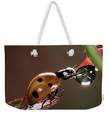 Seven-spotted Ladybird Coccinella Weekender Tote Bag by Jef Meul
