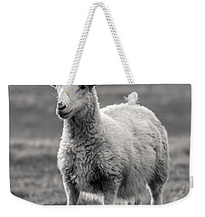 Sheep Art  Weekender Tote Bag by Lucid Mood
