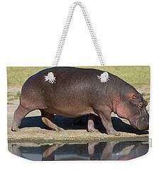 Side Profile Of A Hippopotamus Walking Weekender Tote Bag by Panoramic Images