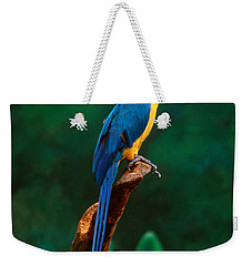 Singapore Macaw At Jurong Bird Park  Weekender Tote Bag by Anonymous