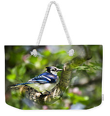 Spring Blue Jay Weekender Tote Bag by Christina Rollo
