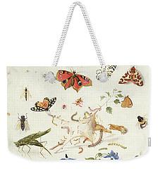 Study Of Insects And Flowers Weekender Tote Bag by Ferdinand van Kessel