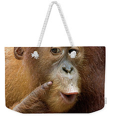 Sumatran Orangutan Baby Calling Weekender Tote Bag by Suzi Eszterhas