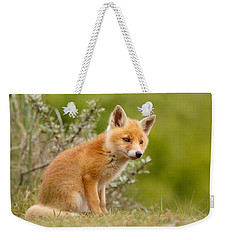 The New Kit ...curious Red Fox Cub Weekender Tote Bag by Roeselien Raimond