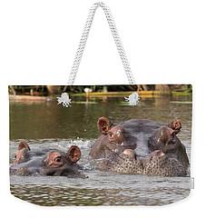 Two Hippopotamus Hippopotamus Amphibius Weekender Tote Bag by Panoramic Images